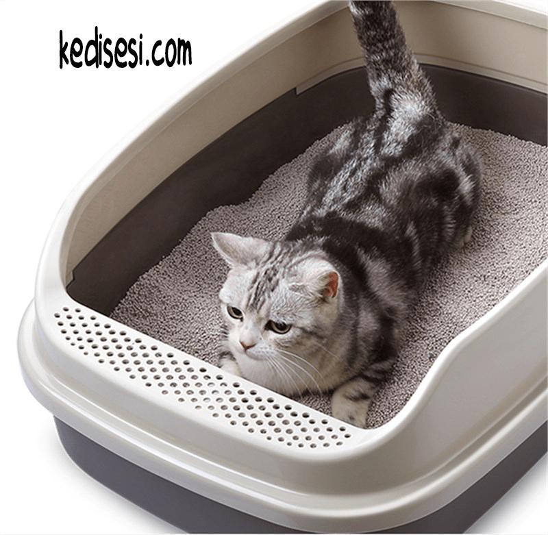 Kedilerde Tuvalet Eğitimi, Tuvalete Alıştırma