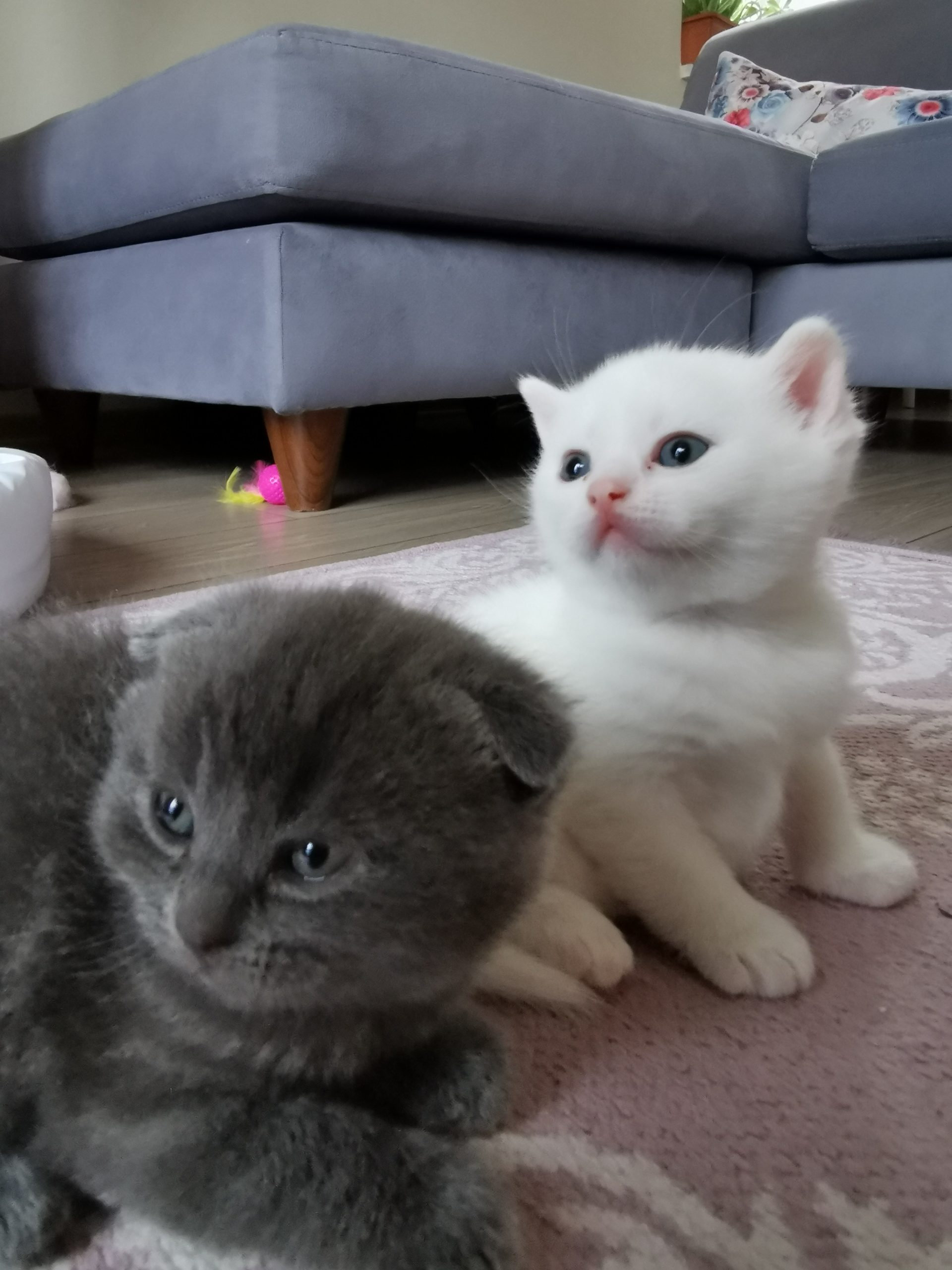 Yavru Kedi Eğitimi | Yavru Kedi Oyunu