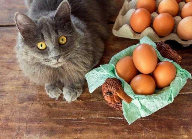 Kediler Yumurta Yer Mi? Sever Mi?