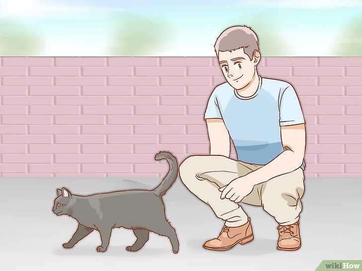 Kedi Cinsiyeti Nasıl Anlaşılır?
