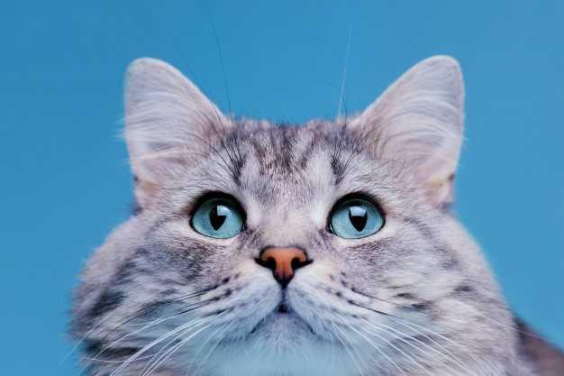 Kedi Sesi | Uzun Versiyon |  Kedi Miyavlaması