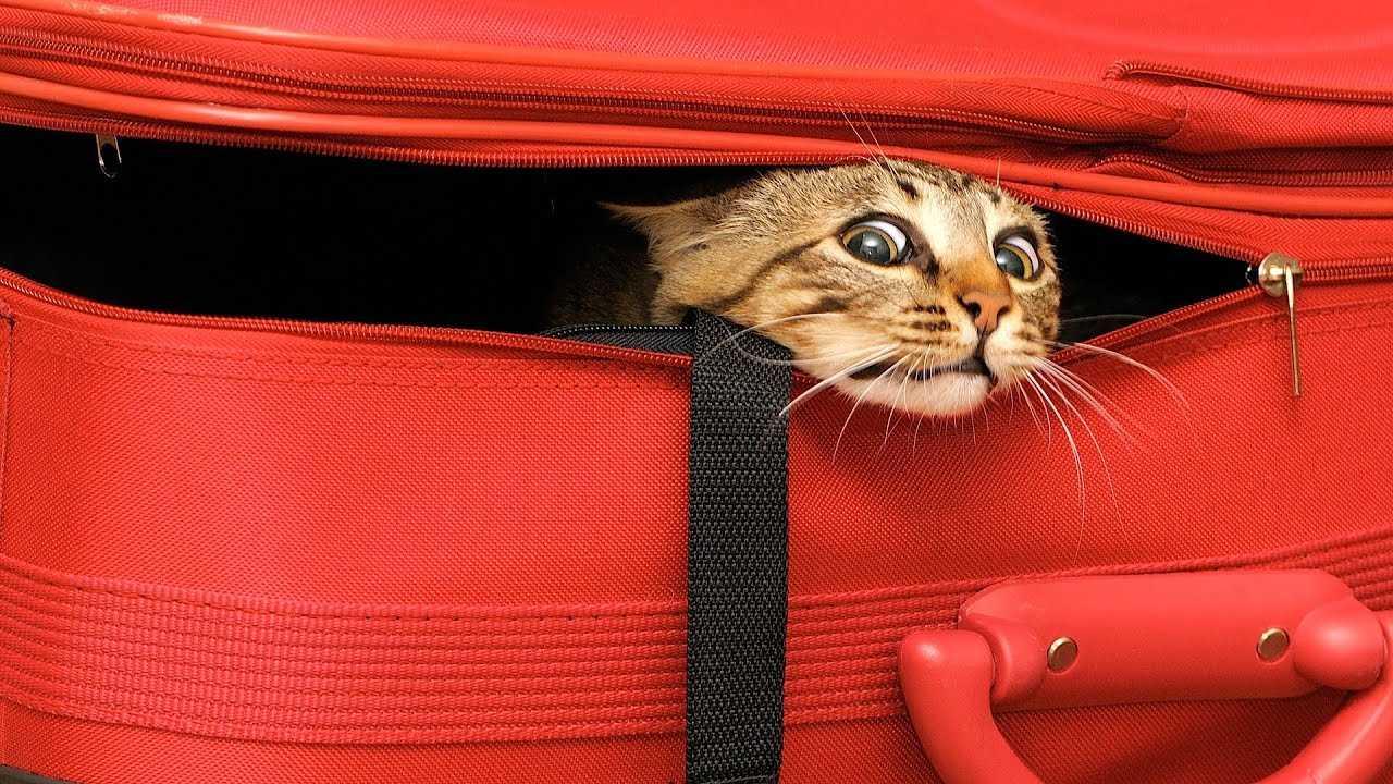 Kedilerle Seyahat Edilir Mi?