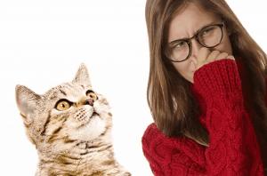 Kedi İdrar Kokusu