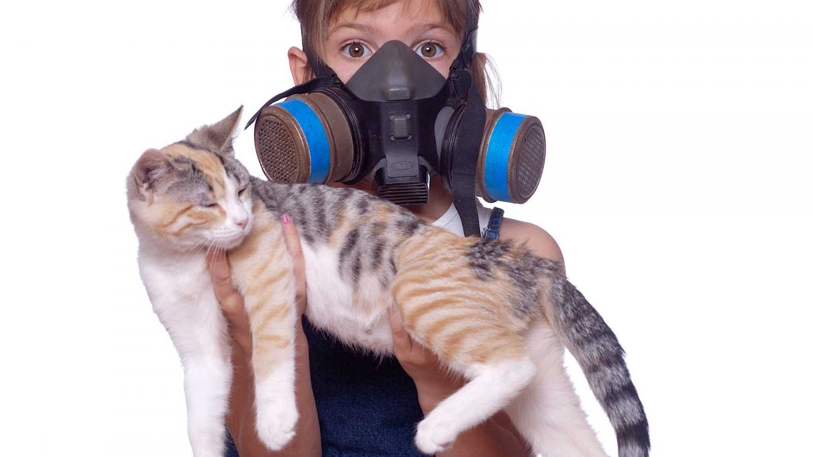 Kedi İdrar Kokusu Nasıl Giderilir? Kedi Çiş Kokusu