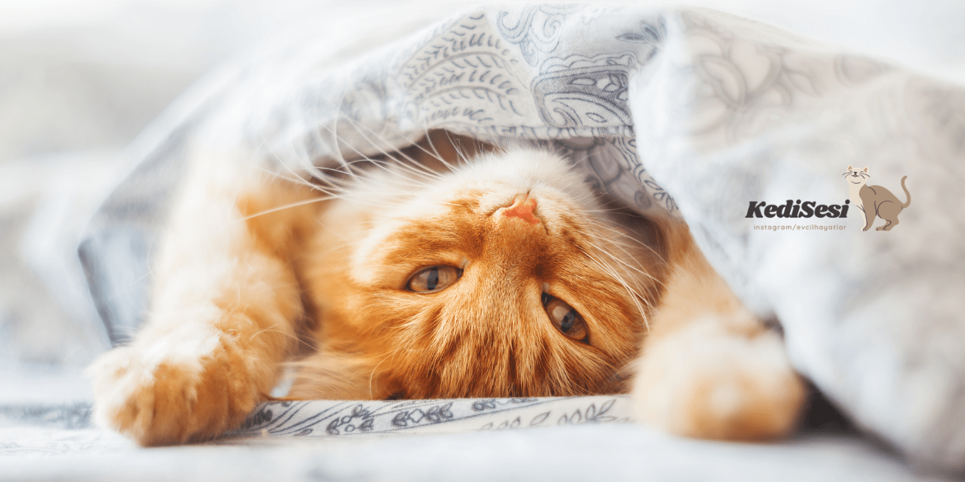 Kedilerde Sık Görülen Hastalıklar ve Belirtileri