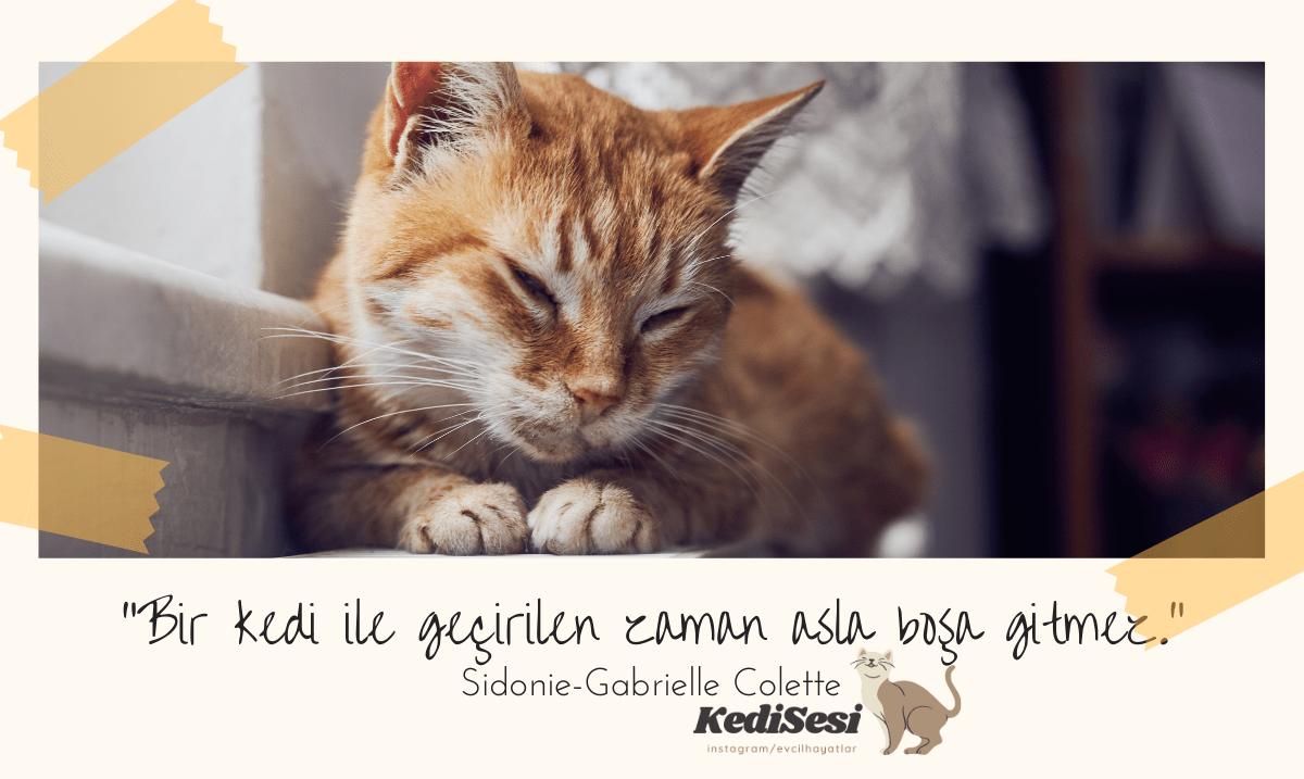 Kedi Sözleri