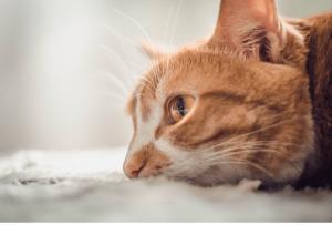 Kediler Günde Kaç Saat Uyur?