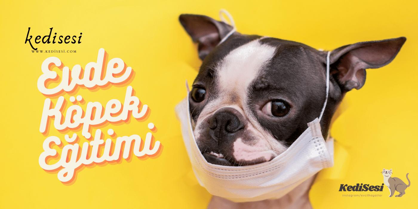 Evde Köpek Eğitimi Nasıl Yapılır?