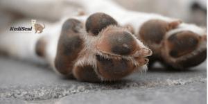 Köpeklerde Deri Hastalıkları