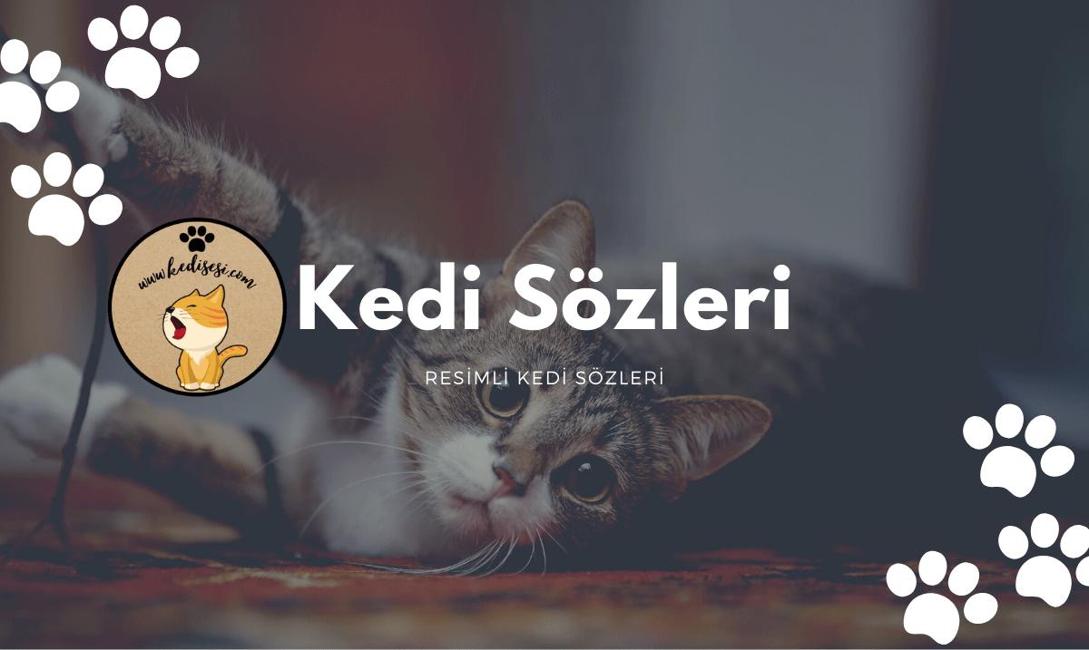Kedi Sözleri | Resimli Kedi Sözleri | Kedi Wallpaper