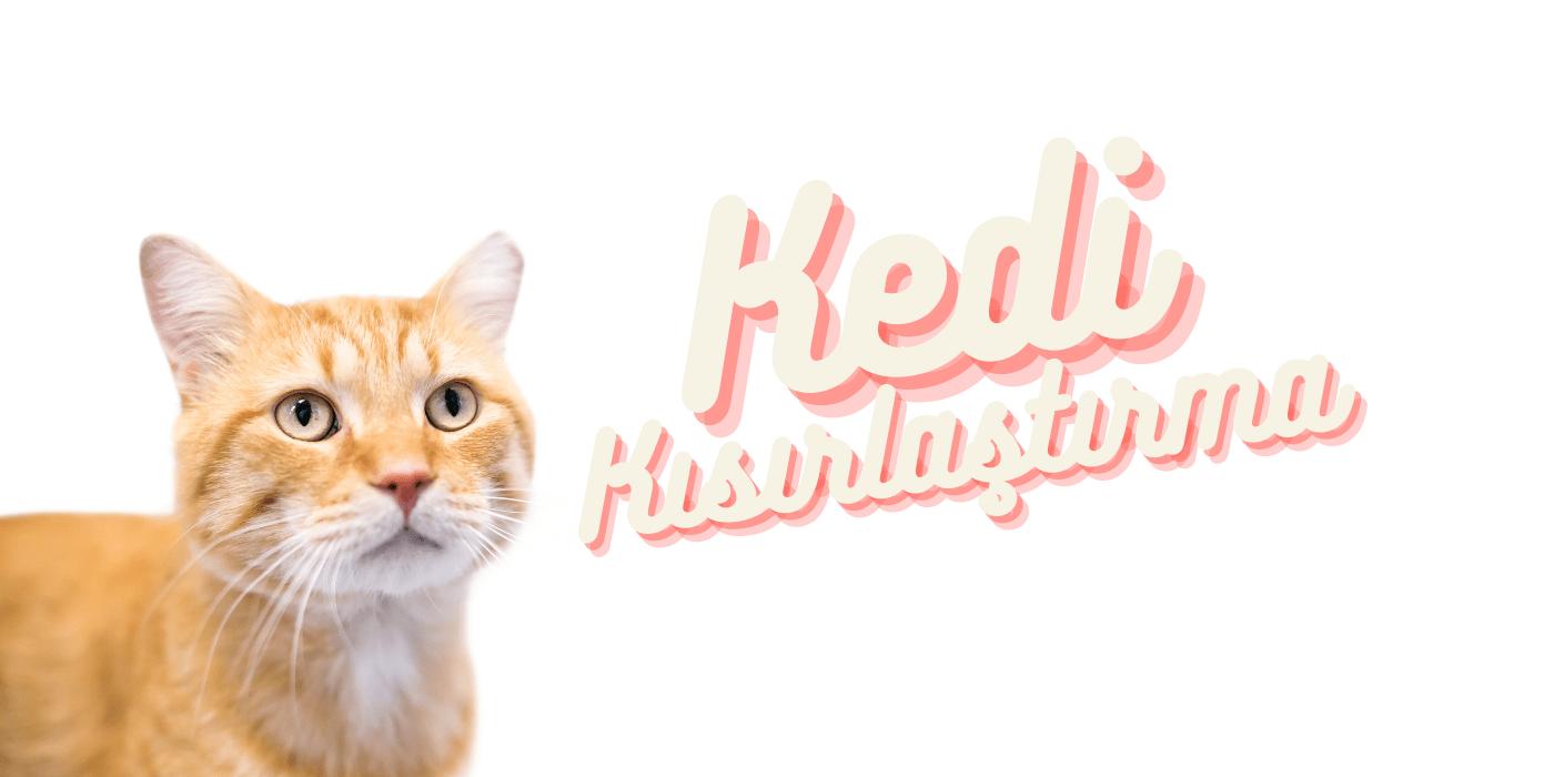 Kedi Kısırlaştırma – Kediler Kısırlaştırılmalı Mı?
