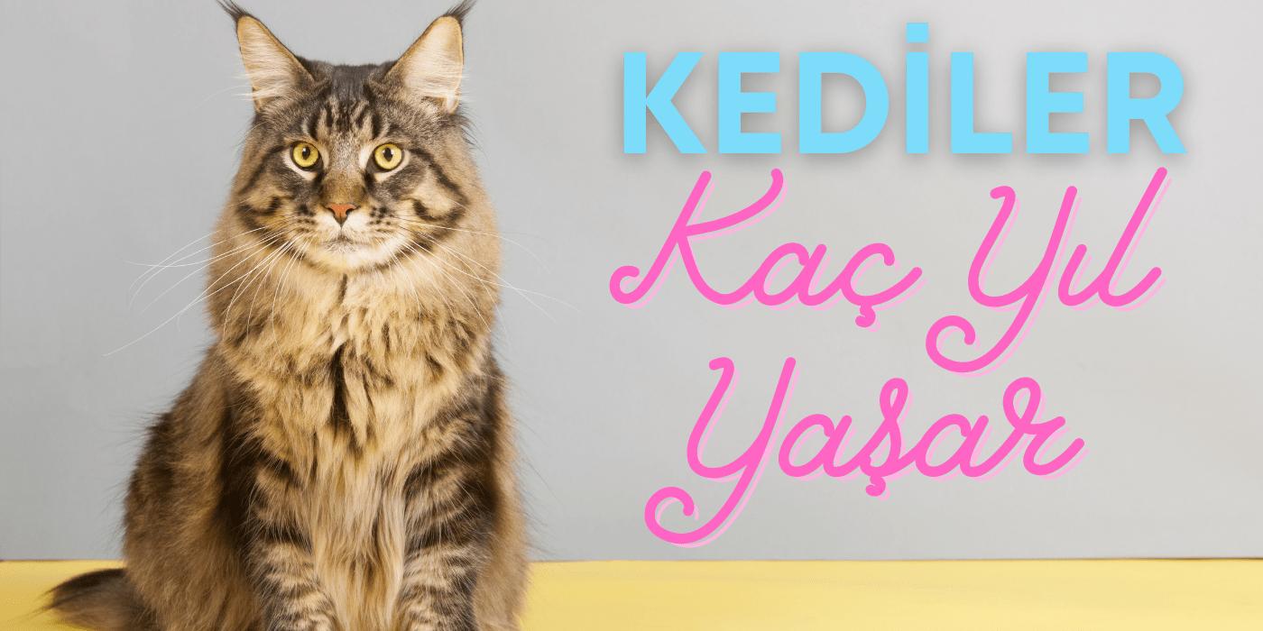 Kediler Kaç Sene Yaşar? Ömrünü Uzatmak