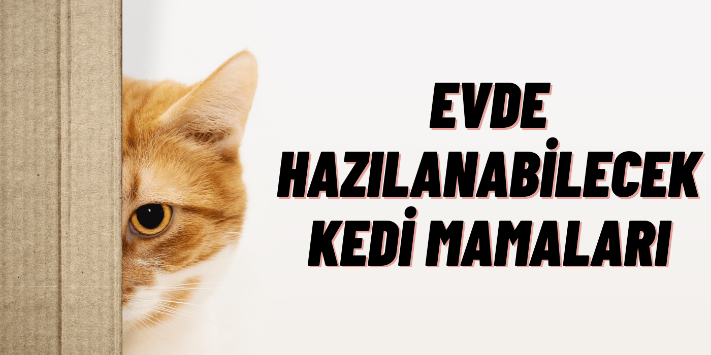 Evde Hazırlanabilecek Kedi Mamaları
