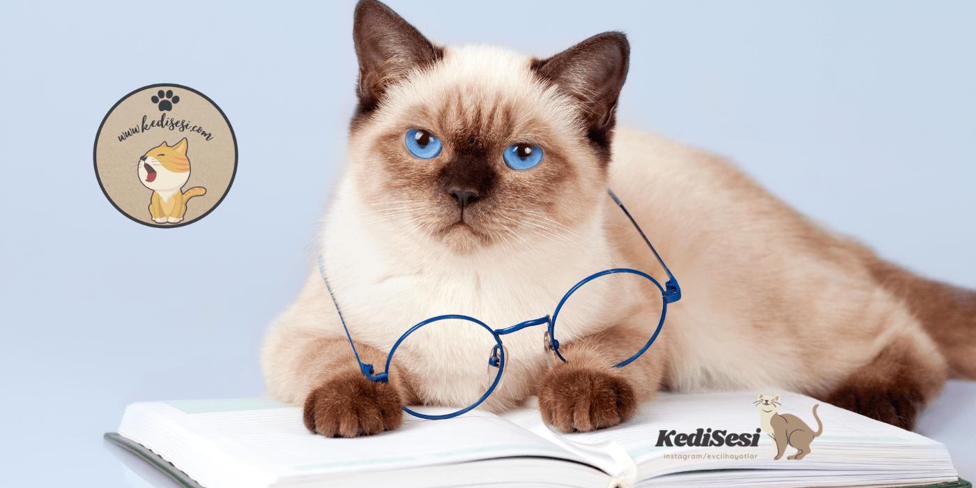 Kedigillerin En Miniği: Kediler