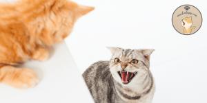 Saldırgan Kediyi Sakinleştirme Yöntemleri