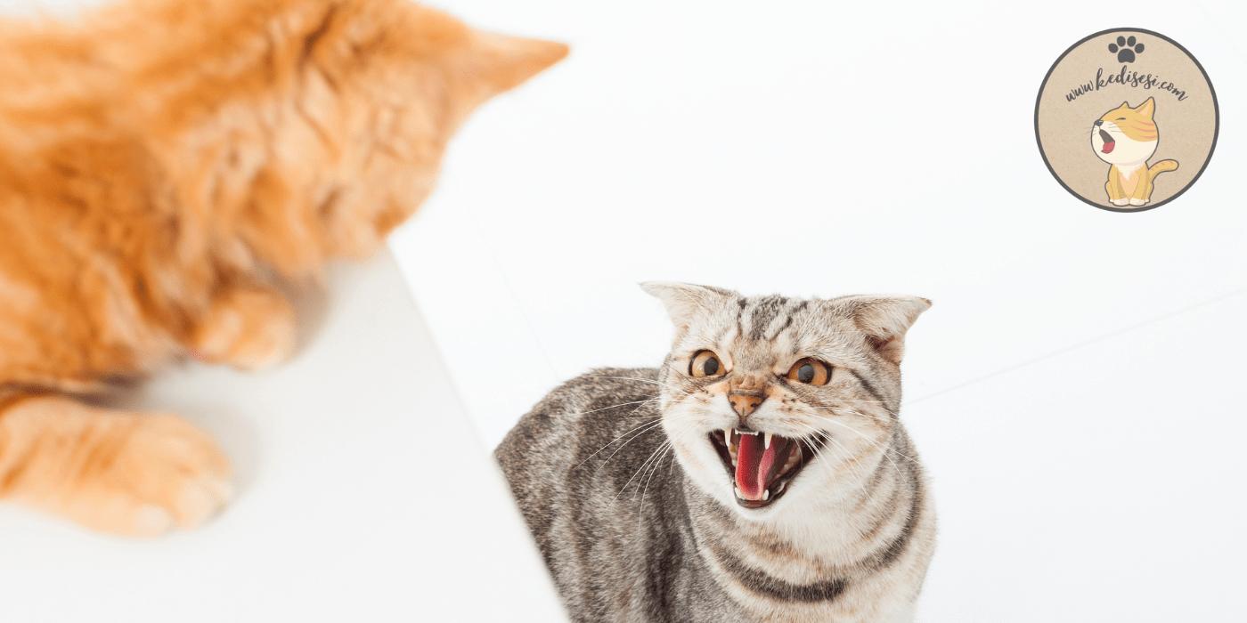 Eve Yeni Kedi Geldiğinde Yapılması Gerekenler
