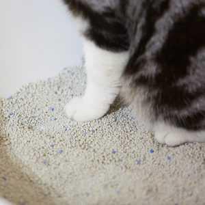 En iyi kedi kumu