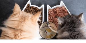 Kediler Yumurta Yer Mi