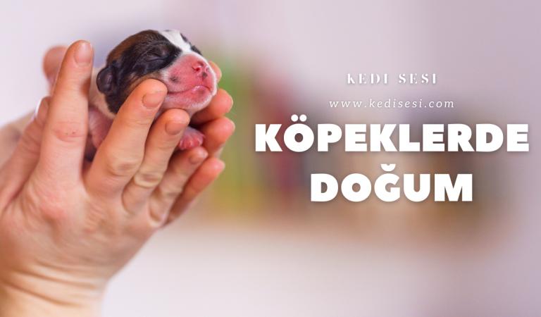 Köpeklerde Doğum Süreci ve Köpekler Kaç Yavru Doğurur