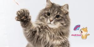Kedilere Dair İlginç Bilgiler