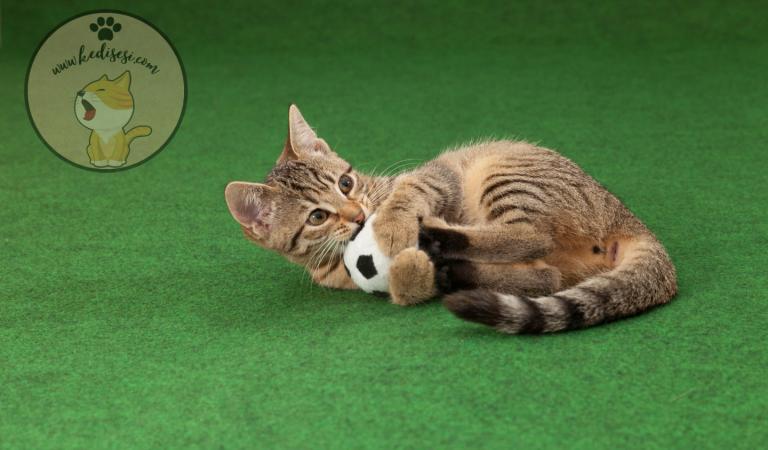 Kediler Hangi Oyuncaklardan Hoşlanır?