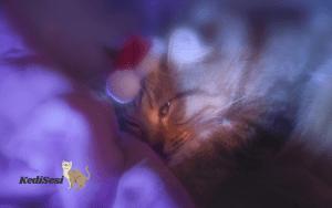 Kediler ve Köpekler Rüya Görür mü?