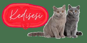 Kedinizi Mutlu Edecek Önemli Tüyolar