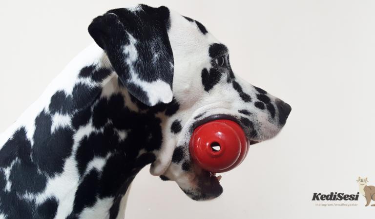 Köpeğinize Oyuncak Seçerken Dikkatli Olun