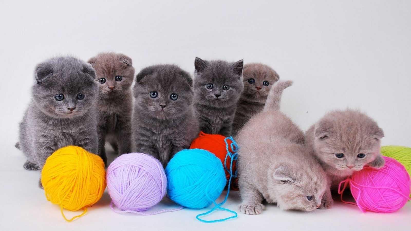 Yavru Kedi Fotoğrafları | Yavru Kedi Resimleri