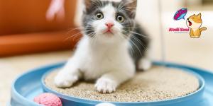 Kediler Nasıl Eğitilir?