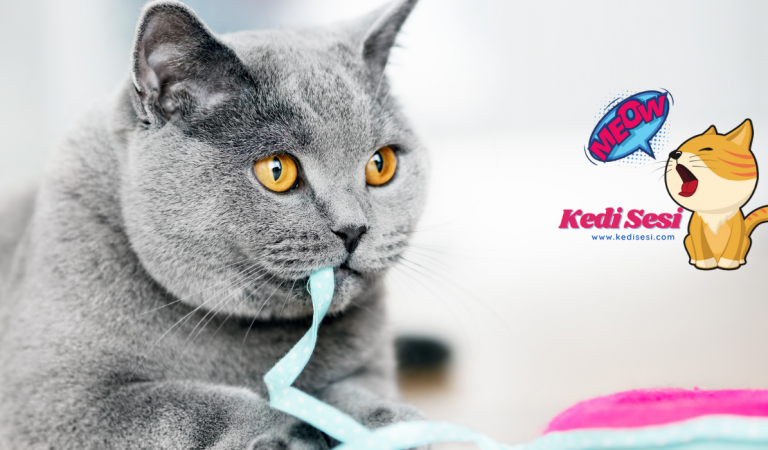 Kediler Nasıl Eğitilir? Yavru Kedi Eğitimi