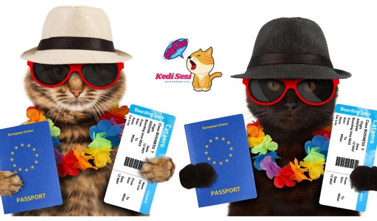2021 Evcil Hayvan Pasaportu Nasıl Alınır?