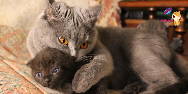 Anne Kedi Yavruları Emzirmiyor Ne Yapmalıyım?