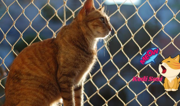 Kedilerin Balkona veya Cama Çıkmasını Önleme