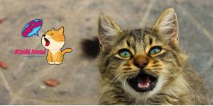 Kedilerin Ağzı Neden Kokar?