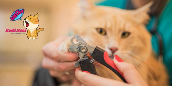 Kedilerin Tırnağı Nasıl Kesilir?