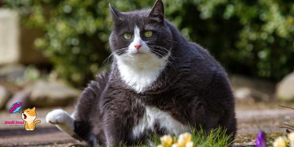 Kedilerin Kilo Alması İçin Ne Yapılmalı?