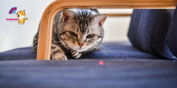 Kediyi Lazerle Oynatmak Zararlı Mı?