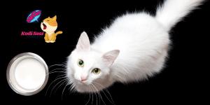 Sütün Kedilere Zararları Nelerdir?
