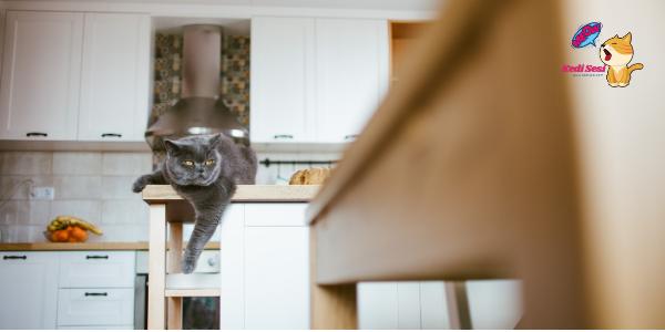 Kedilerin Tezgaha Çıkması Nasıl Önlenir?