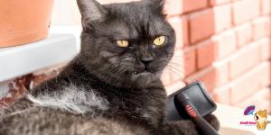 Kedimi Tıraş Ettirmeli Miyim?
