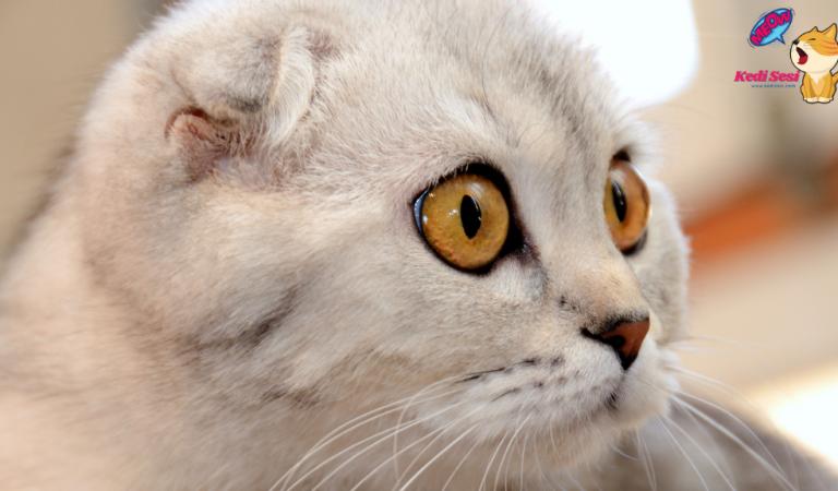 Kedimin Gözü Görüyor Mu Nasıl Anlarım?