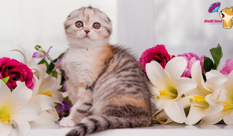 Kedilerde Yağlı Kuyruk Problemi Nedir? Belirtileri Nelerdir?