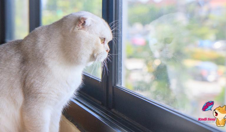 Kediler Yalnız Yaşayabilir mi?