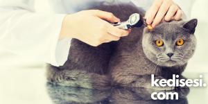Kedilerde kulak sıcaklığı hastalık belirtisi mi?