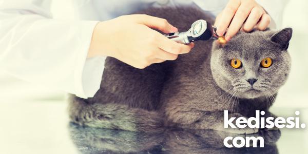 Kedi Kulak Sıcaklığı Hastalık Belirtisi Mi?