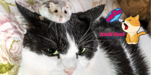 Kediler Hamster Yer mi?