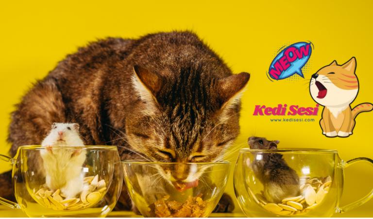 Kediler Hamster Yer mi? Aynı Evde Bakılır Mı?