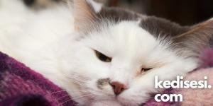 Kedilerden İnsanlara Geçen Hastalıklardan Korunma Yöntemleri