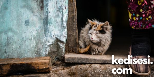 Kedilerden İnsanlara Hastalık Geçer mi?